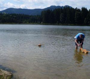Jackie_beim_Apportieren_aus_dem_Wasser_und_Milo_bei_seinen_ersten_Schwimmversuchen
