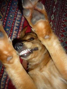 a._schaut_mal_meine_neuen_Zähne