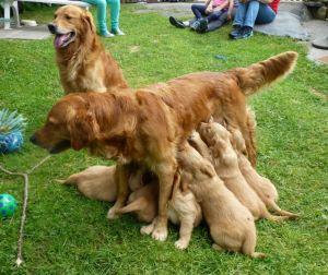 8_Mama_Papa_und_zehn_Kinder